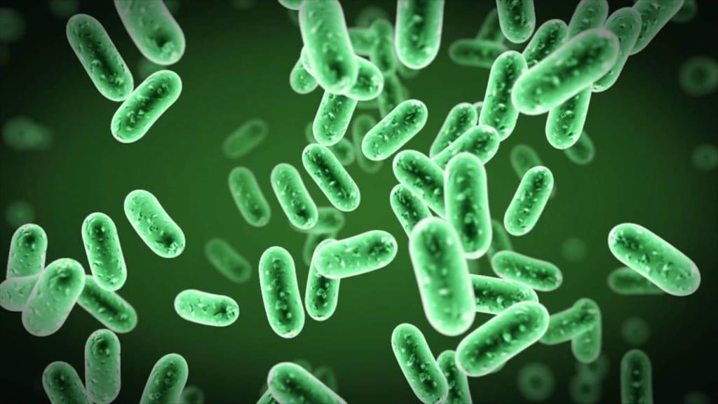 vi khuẩn Bacillus thuringiensis