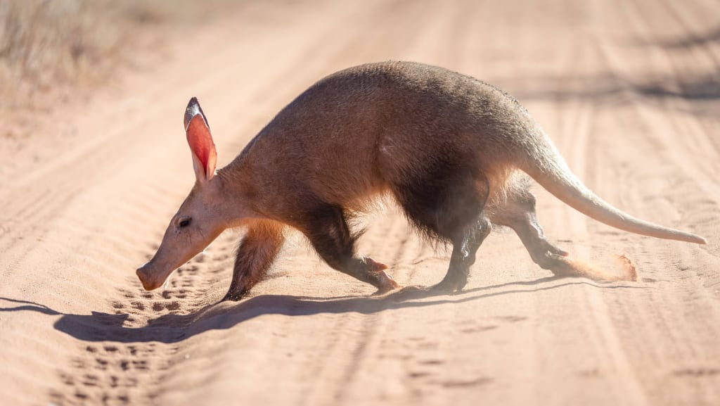 Aardvark là con gì