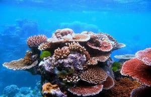 Một trong những rạn san hô đẹp nhất thế giới